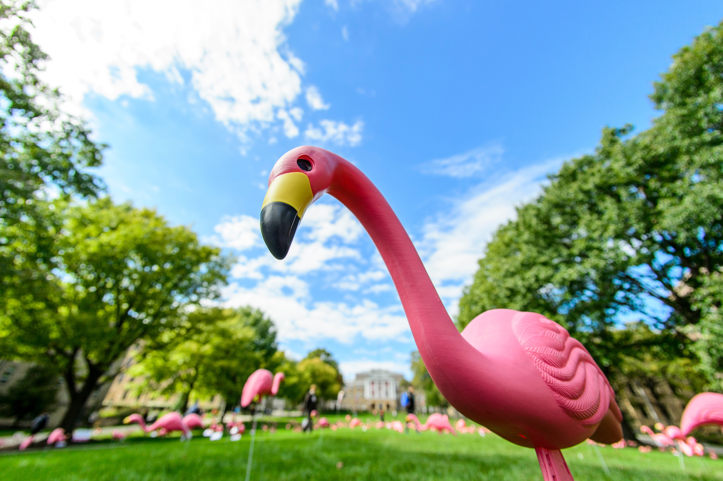 Pink flamingo in front of bascom